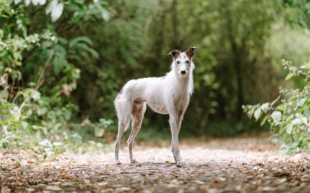 Outdoor Dog Photography Workshop with Elke Vogelsang
